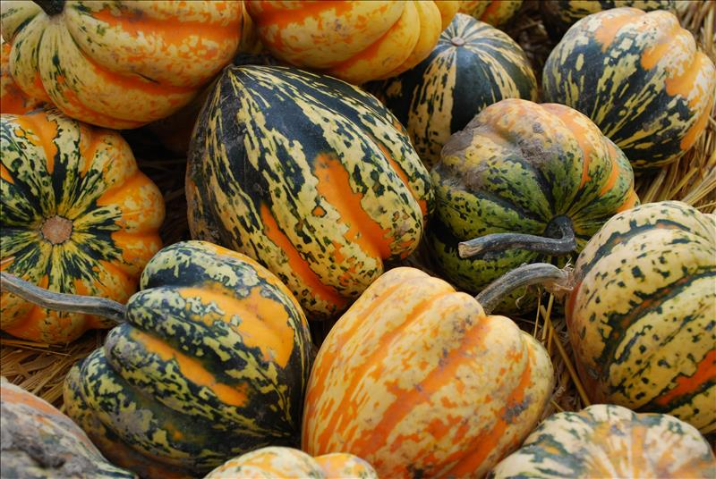 Fall for winter squash